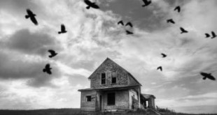 Abandoned farmhouse with crows.